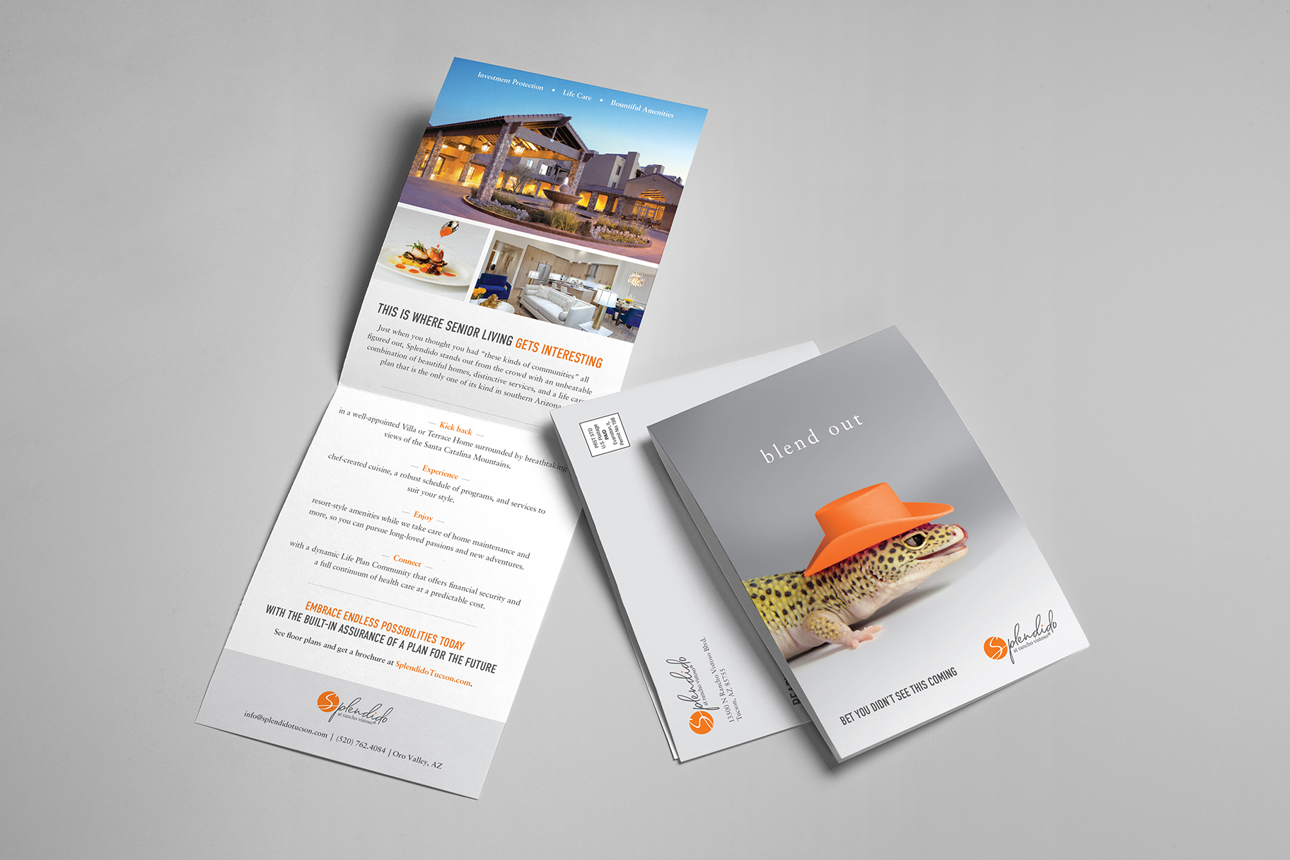 Mather Splendido Print Direct Mail - Lizard and property shot